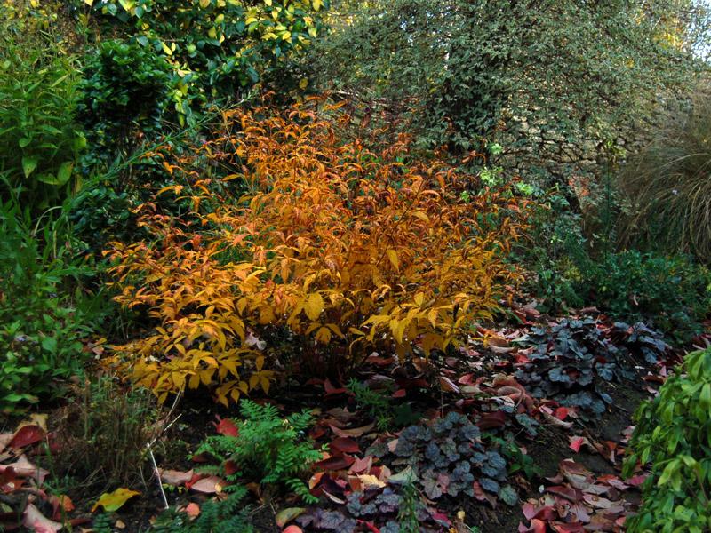 Vermiculite For Plants Gillenia trifoliata