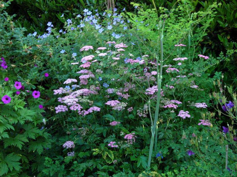 Vermiculite For Plants Pimpinella major 'Rose...